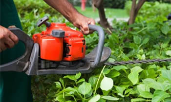 Shrub Removal in Shawnee OK Shrub Removal Services in Shawnee OK Shrub Care in Shawnee OK Landscaping in Shawnee OK
