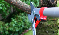 Tree Pruning Services in Shawnee OK